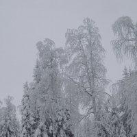 зимний наряд :: petyxov петухов
