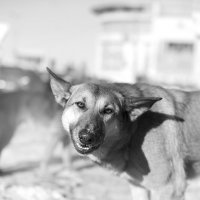 Собака-улыбака :: Елена Васильева