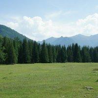Альпийские луга Алтая :: Ольга Чистякова