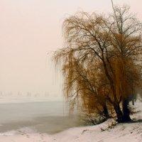 Природа в тоске по ярким краскам.. :: Наталья Честных