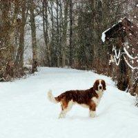 который день уж снег идёт... :: liudmila drake