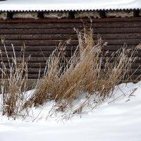 Зимняя картина :: Николай Танаев