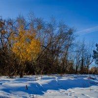 Осенние краски в зимнем лесу :: Марк