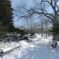 Прогуливаясь в парке Торонто... (High Park) :: Юрий Поляков