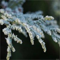 Зима в Швеции :: Swetlana V