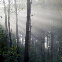 Утро в лесу :: Юрий Цыплятников