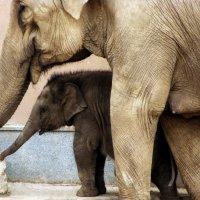 Мать и дитя. :: Елена Дёмина