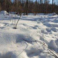 Снег. :: Oleg4618 Шутченко