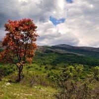 Весна в крымских горах :: Владимир Марчук