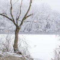 зима :: igor-0875