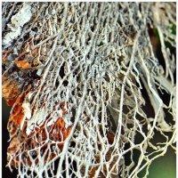 Природа создает самые интересные текстуры :: Ольга Степанова