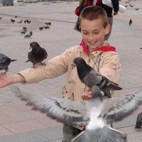Голуби :: Дмитрий Лебедихин