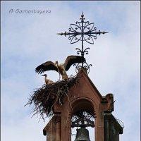 Аисты - символ Эльзаса. :: Anna Gornostayeva