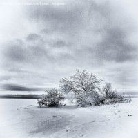 Зима в квадрате :: Elena Gontarenko