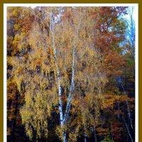 Осень :: Tata Wolf