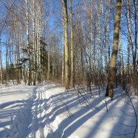 Скоро весна :: Ната Волга