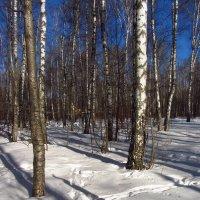 Img_2297 - Вариации на тему приближения Весны :: Андрей Лукьянов