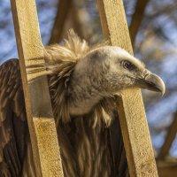 Сижу за решеткой в темнице сырой, вскормленный в неволе орел молодой... :: Natalia McCarova