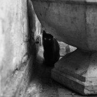 Чёрная кошка :: Анна Анхен