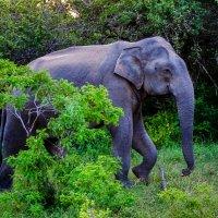 Слон :: Андрей Качин