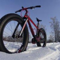 Велик для зимы :: Евгений Бурындин