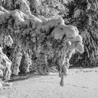 Сказочный лес :: Sergey Kuznetsov