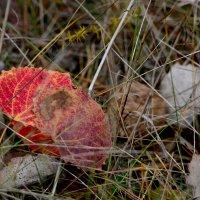 Осенний лист :: Ира Петрова