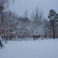 После снегопада. :: Владимир Брусенцев