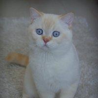 Котик :: pich