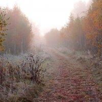 Осенняя тропа :: Татьяна Малинина