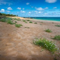 Пляжные цветы :: Olga Mach