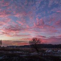 Зимний рассвет :: Лидия Цапко