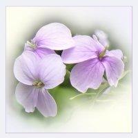 цветы :: Валентина. .