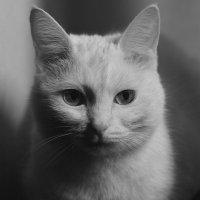 Лукерья.Фото На паспорт.:) :: Val Савин