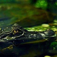Если ты полюбил крокодила... :: BoykoOD