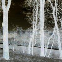 Сказочный лес :: Мария Т