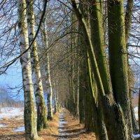 Конец зимы... :: Наталья Лунева