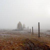 Заброшенное поле :: Татьяна Малинина