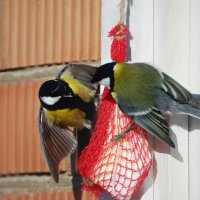 """яблоко"" раздора) :: linnud"