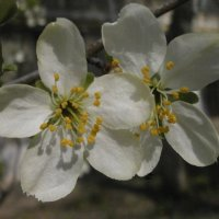 Была весна... :: Алёна Савина