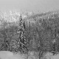 туман и солнце :: Александр Потапов