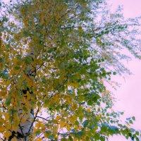 Осень, какая ты была.. :: Риша 13
