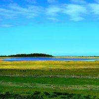 Пруд у озера :: Ася Григорьева