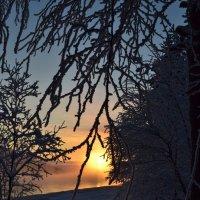 Туманный вечер :: Ольга