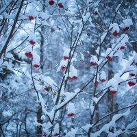 в ожидании снегирей :: Мария Корнилова