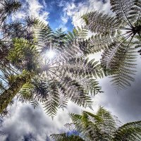 пальмы в квадрате :: Александр