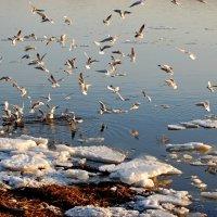 Весна и птицы :: Teresa Valaine