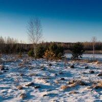 Зимний вечер Полесья :: Андрий Майковский