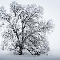 Ветвистое... :: Константин Филякин