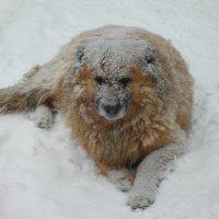Зимой не сладко... :: Владимир Сквирский